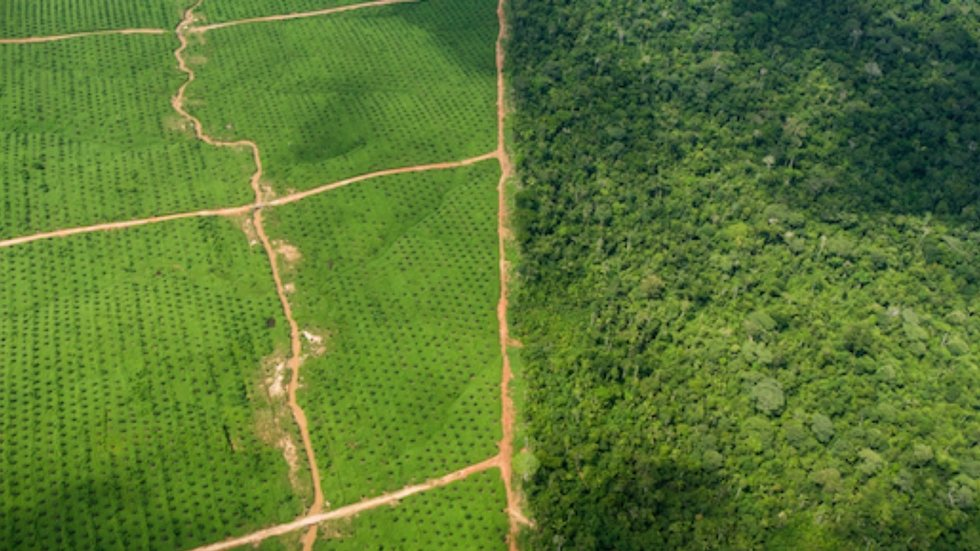 Peru to End Palm Oil Driven Deforestation by 2021