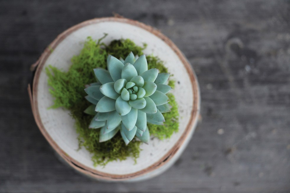 3 Succulent DIY Projects You Haven't Seen Yet