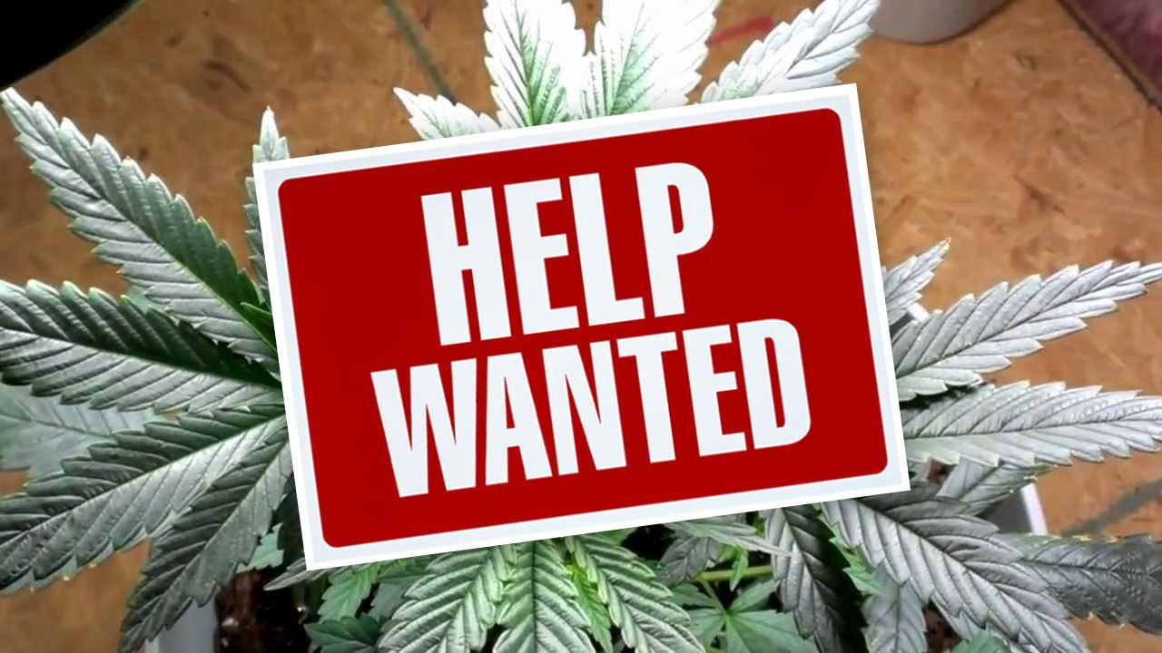 10 Careers In The Growing Cannabis Industry