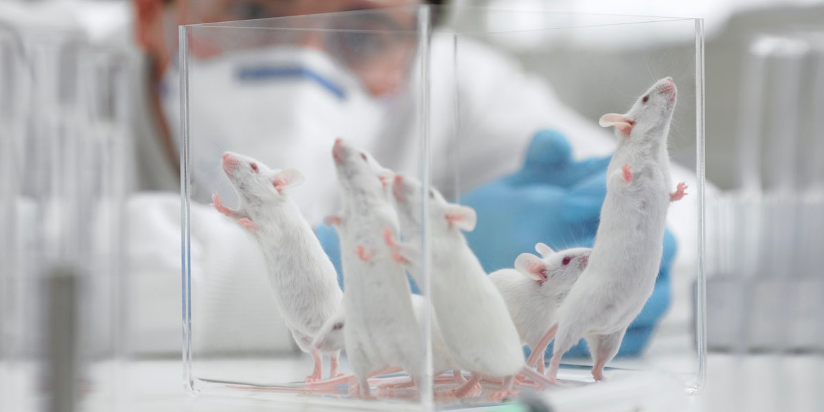 The EPA Will End Mammal Testing by 2035