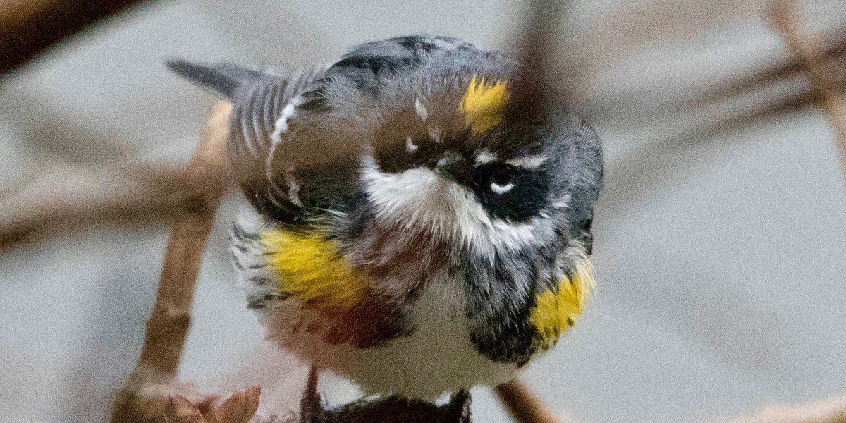 North America Has Lost Nearly 3 Billion Birds since 1970, Says New Report