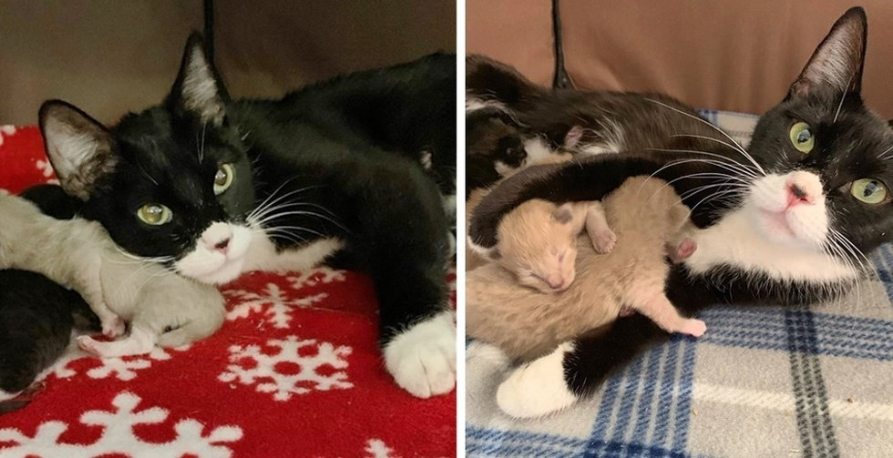 Stray Cat Came to Family for Help – When Rescue Arrived, They Found Kitten by Her Side