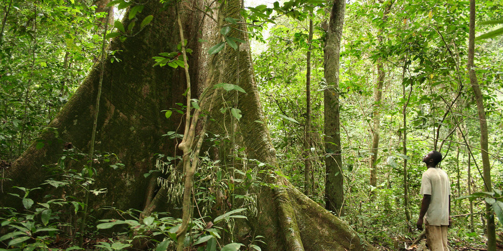 Gabon is the First African Nation to Be Rewarded for Conservation Practices