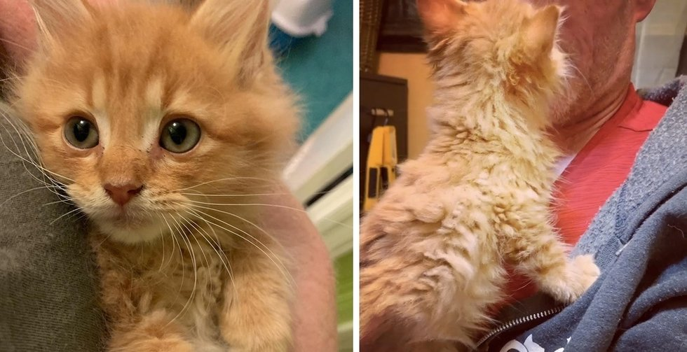 Kitten Insists on Being Cuddled After He Was Rescued from Tough Life on Streets