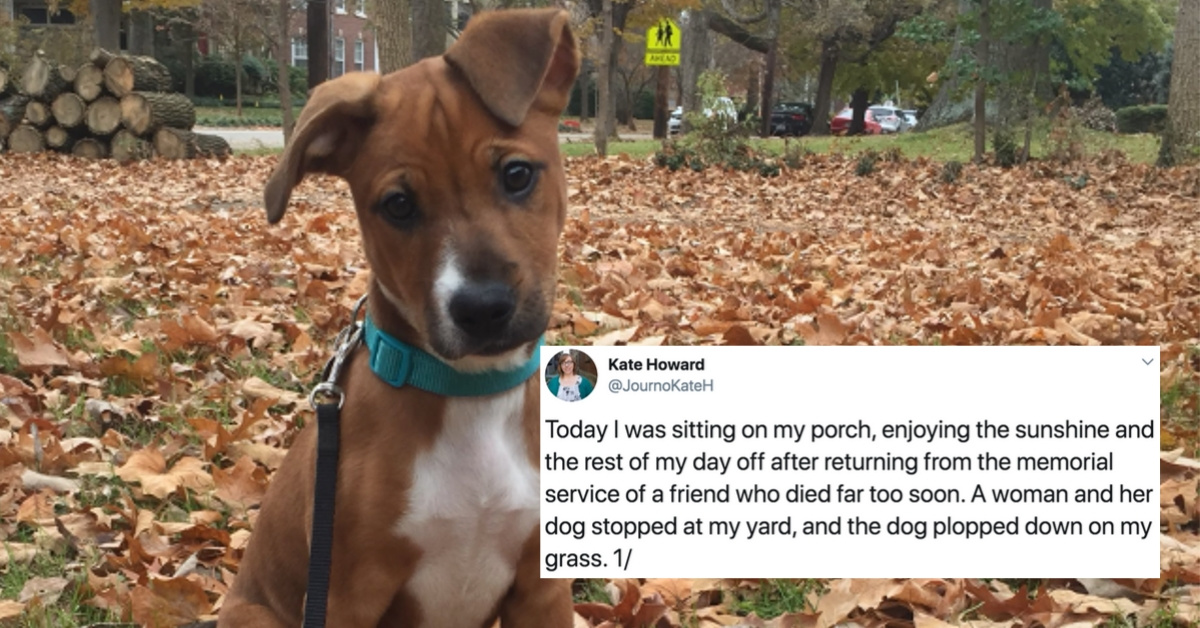 Woman's Emotional Foster Dog Reunion Story Is Serendipity At Its Finest