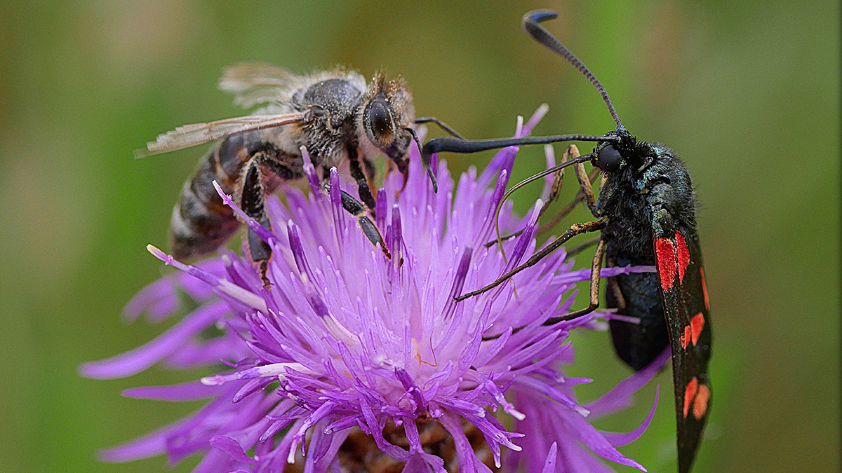 To Stop an Insect Die-Out the World Needs Pollinator-Friendly Policies Scientist Warns
