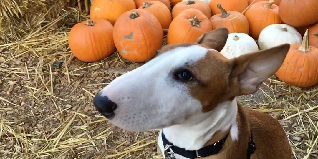 10 Best Pumpkin Patches in the Bay Area
