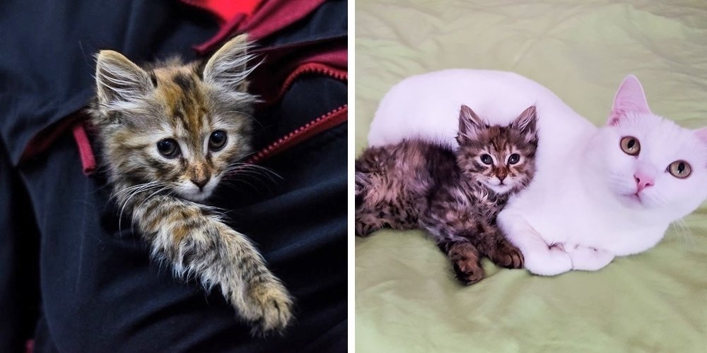 Kitten Wandered Near Family's Home and Found Kindness After She Was Abandoned on Street