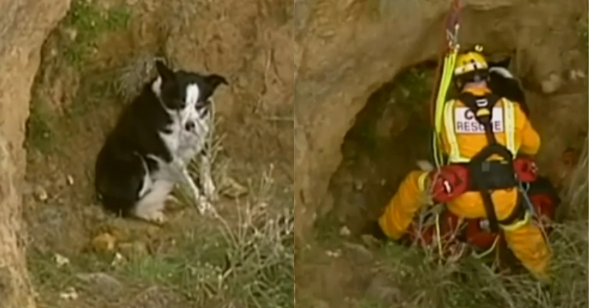 Poor Pooch Happy To Be Rescued After Falling Down Steep Beachside Cliff