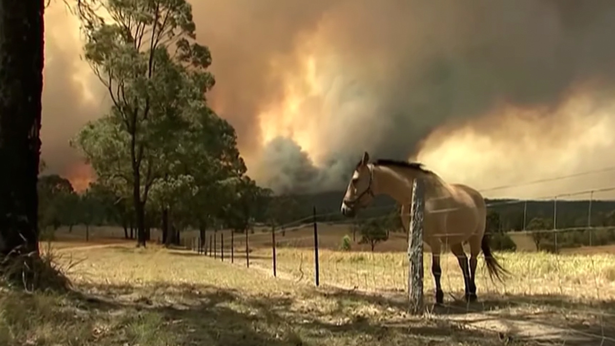 Sydney Faces 'Catastrophic Fire Danger' for First Time as 130 Australian
