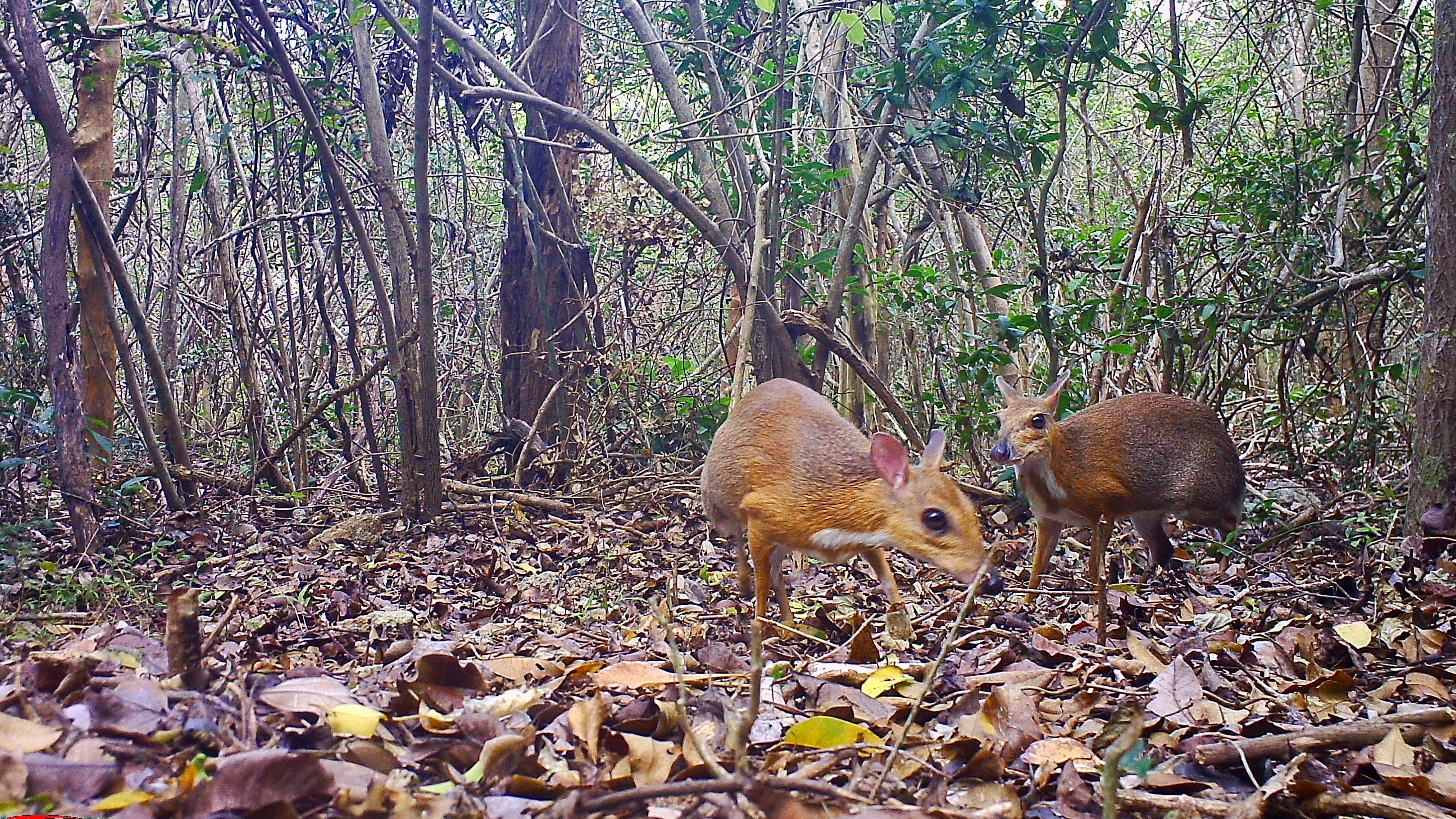 One of 25 Most Wanted Species Rediscovered in Remote Vietnam