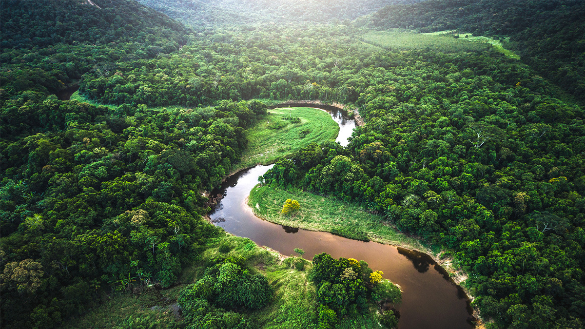 photo of $10M in Prize Money for Mapping Rainforest Biodiversity image