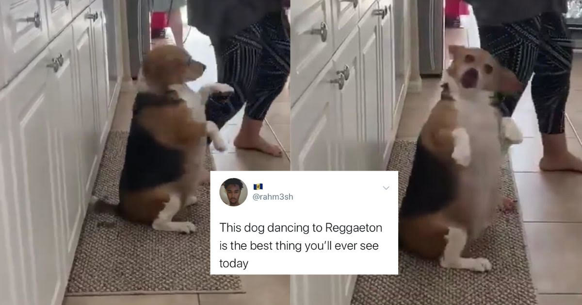 People Are Smitten With This Video Of A Dog Getting Down To Some Reggae Music