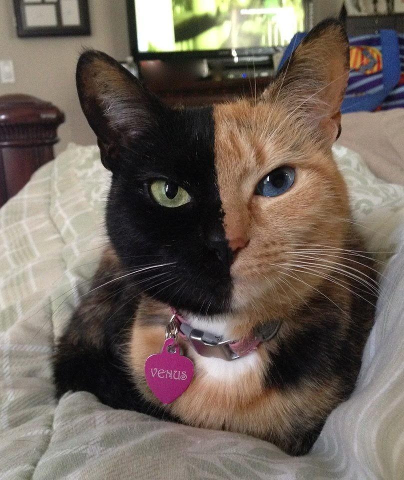 Photos de chatte rares