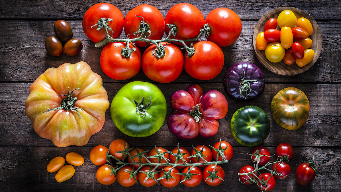 Modern Tomatoes Are Very Different From Their Wild Ancestors – and We Found Missing Links in Their Evolution - EcoWatch