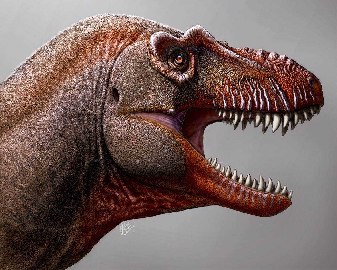 Reaper of death  who fed on other dinosaurs discovered