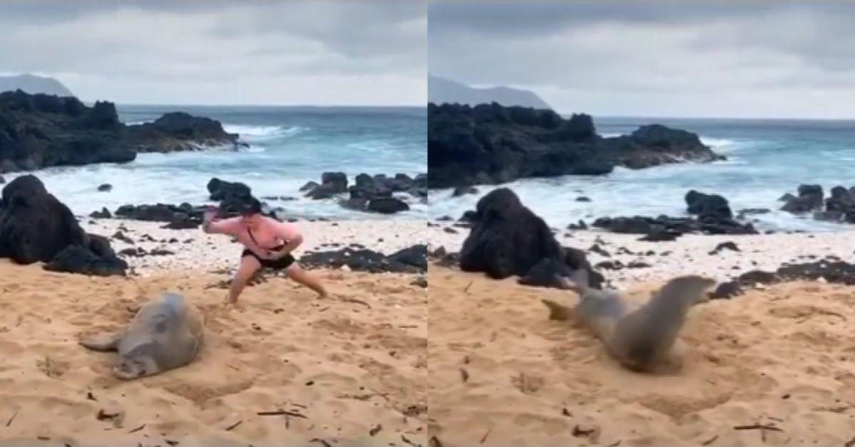 Guy Apologizes For TikTok Video Of Man Slapping Endangered Seal In Hawaii After Backlash
