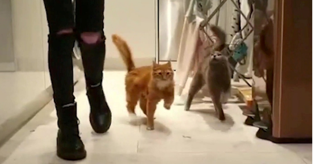 Pair Of Adorable Cats Both Suffer From Rare Condition That Causes Them To Constantly Wobble