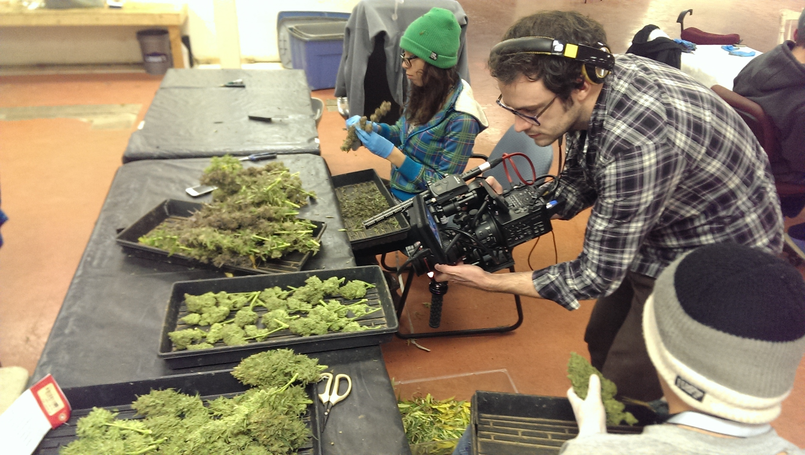 8 Must-See Documentaries About Marijuana