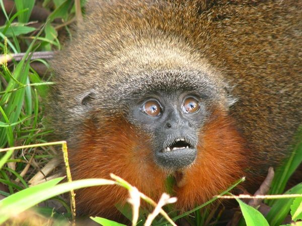 Bearded Monkey Name: You Should Be Jealous Of These 13 Animals' Seriously Epic