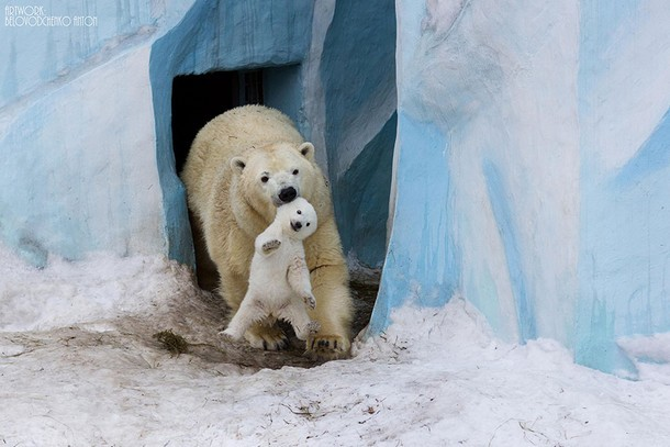 Of The Most Adorable Parenting Moments In The Animal Kingdom - 22 adorable parenting moments in the animal kingdom