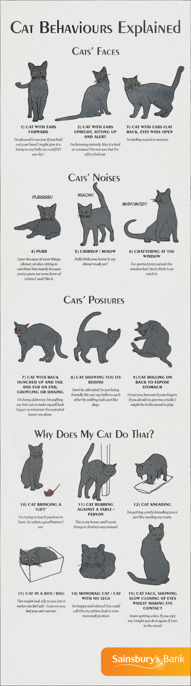 How to understand what your cat is trying to say higher perspective share using facebook buycottarizona