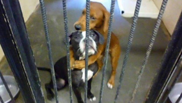 Here's how 'hugging dogs' which saved from euthanization start new life together