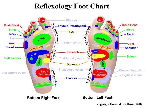 Reflexology Foot Chart The Dr Oz Show The Dr Oz Show