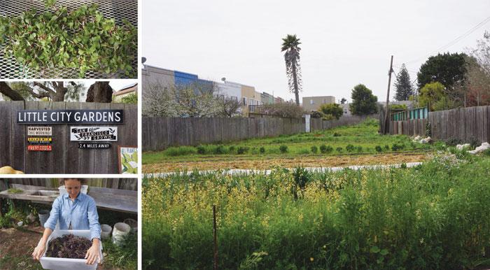 Little City Gardens / San Francisco, CA - PAPER