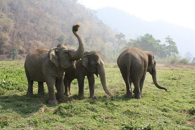 Everything You Should Know About Riding Elephants In Asia