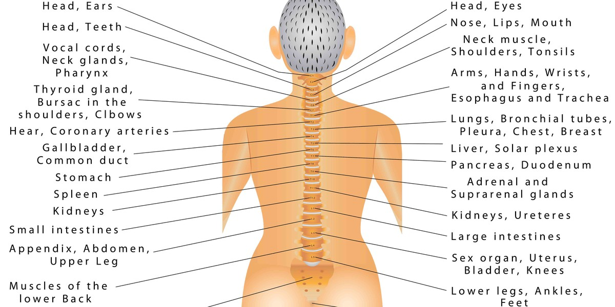 Spine Connected Organs 1457256768