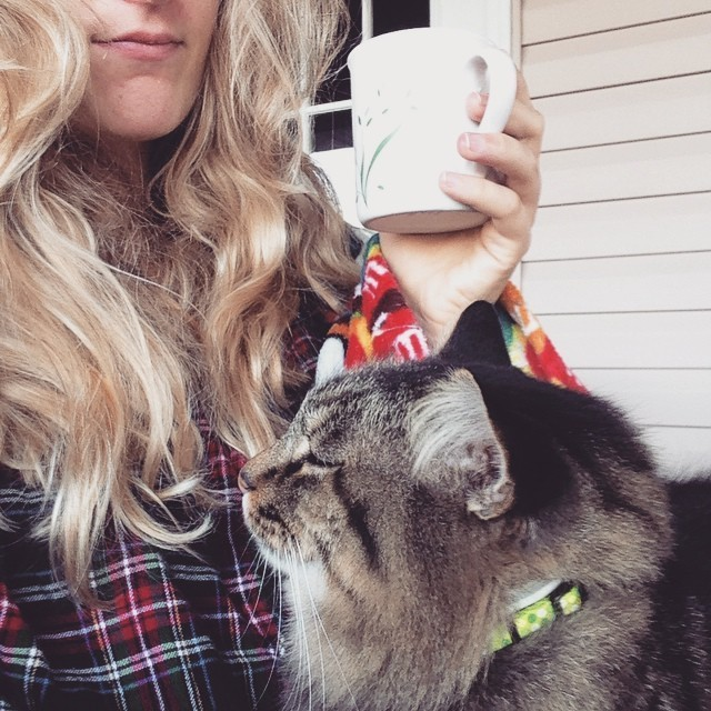 i love my cat essay Free essay examples, how to write essay on why i love cats example essay, research paper, custom writing write my essay on cat cats love.