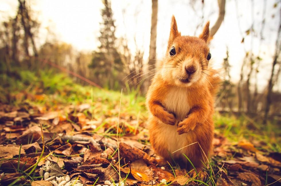 N.c. Squirrel Season How Do Squirrels Keep ...