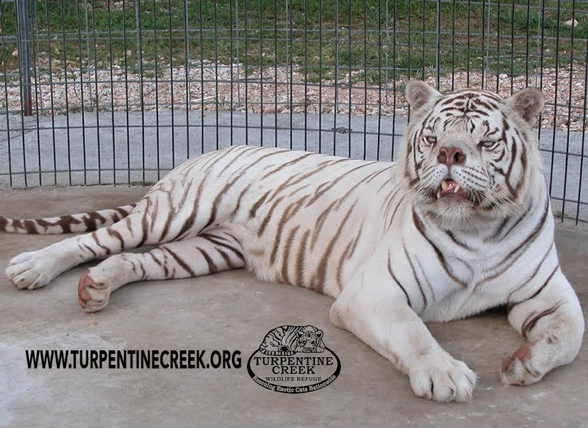 Flying Tiger Japan on Instagram Happy White day