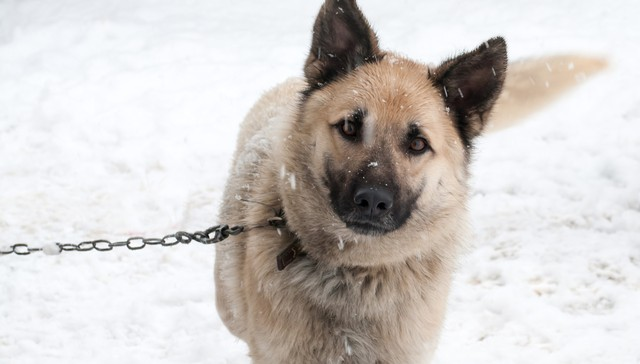 What To Do If You See A Dog Chained Up Outside In The Cold