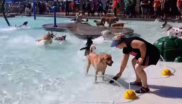 Splash Filled Puppy Pool Party Raises Money For Local Dog Park