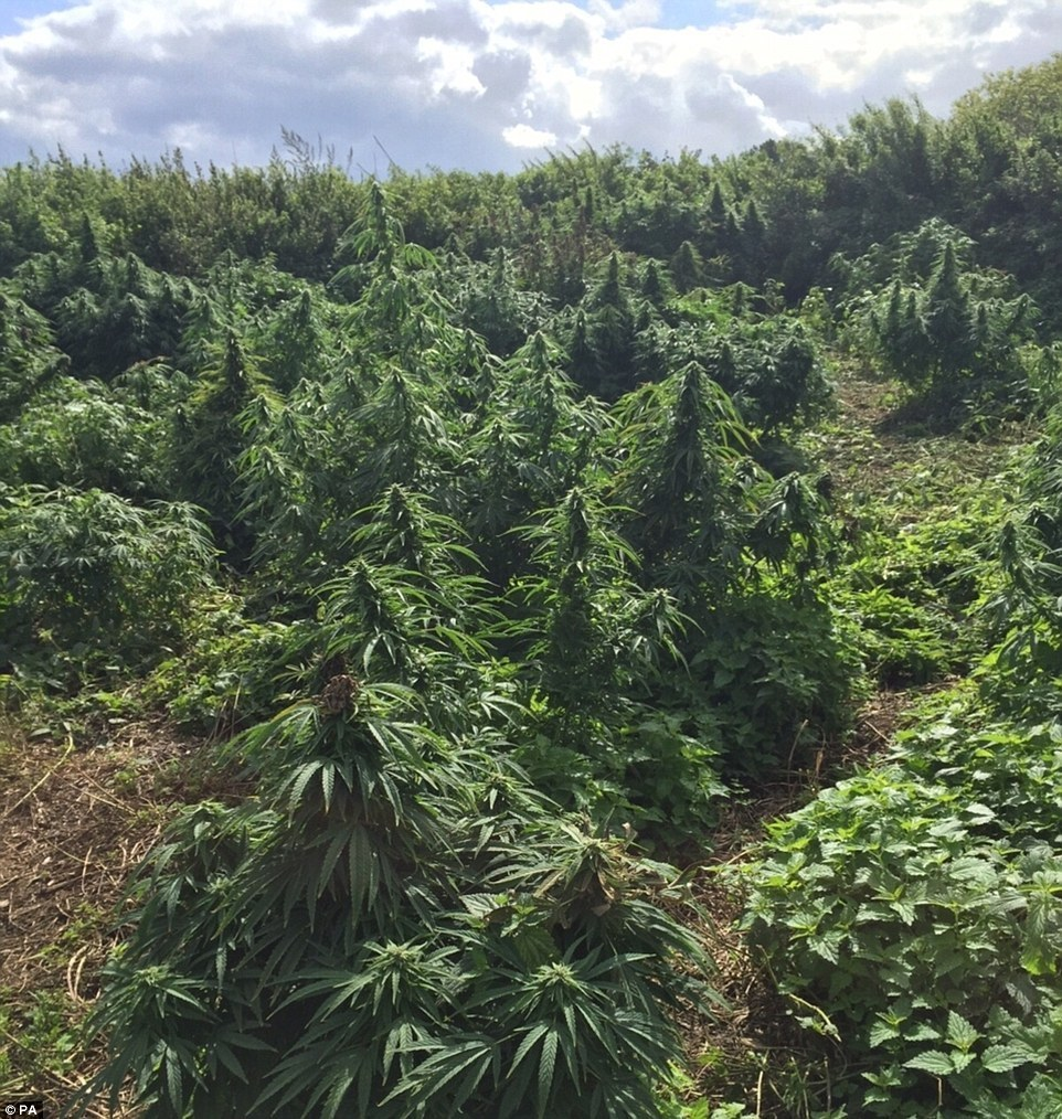 Those Weren't Christmas Trees Discovered in A Southwest London 'Forest'