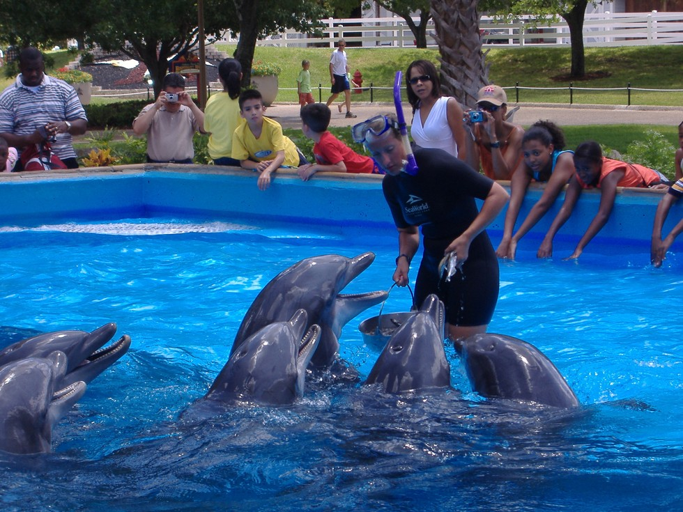 Exclusive Three Former Employees Reveal The Shocking Realities Of Seaworld 39 S Dolphin Feeding Pools