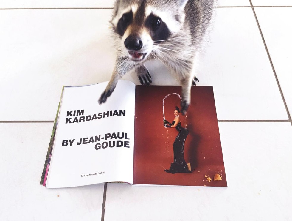 Pumpkin The Raccoon Takes Instagram By Storm - Pumpkin rescued raccoon