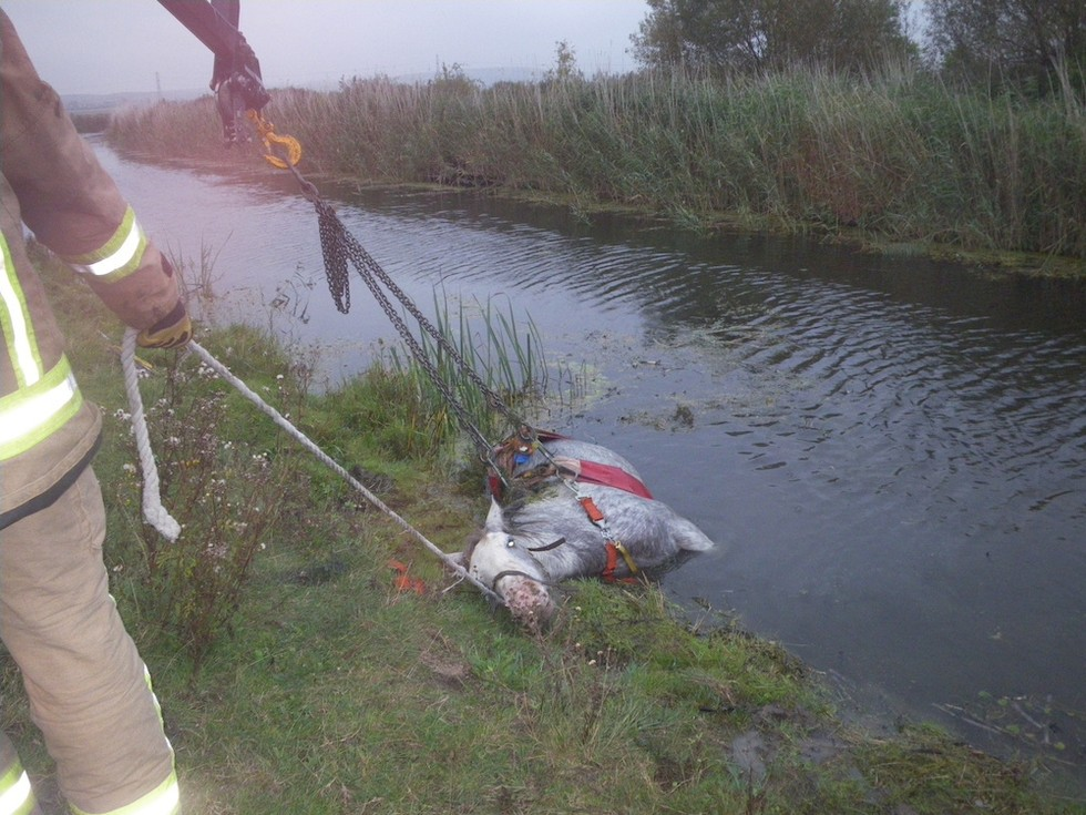 Drowning Horse Rescued From River 'Just In The Nick Of Time'