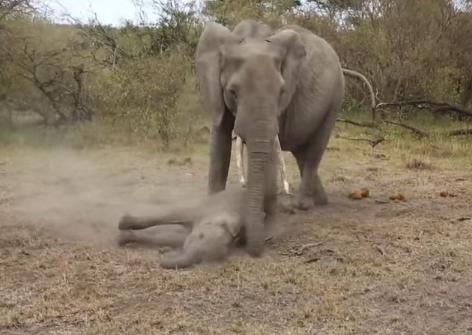 Xxx swingers photos of girls fucking elephant morgan fuck video