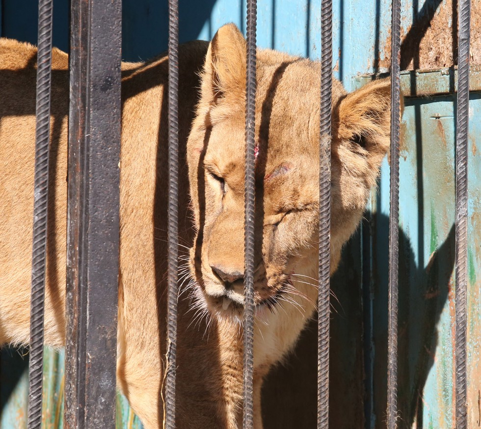 Animals Left To Die At Abandoned Zoo Are Losing Their Minds
