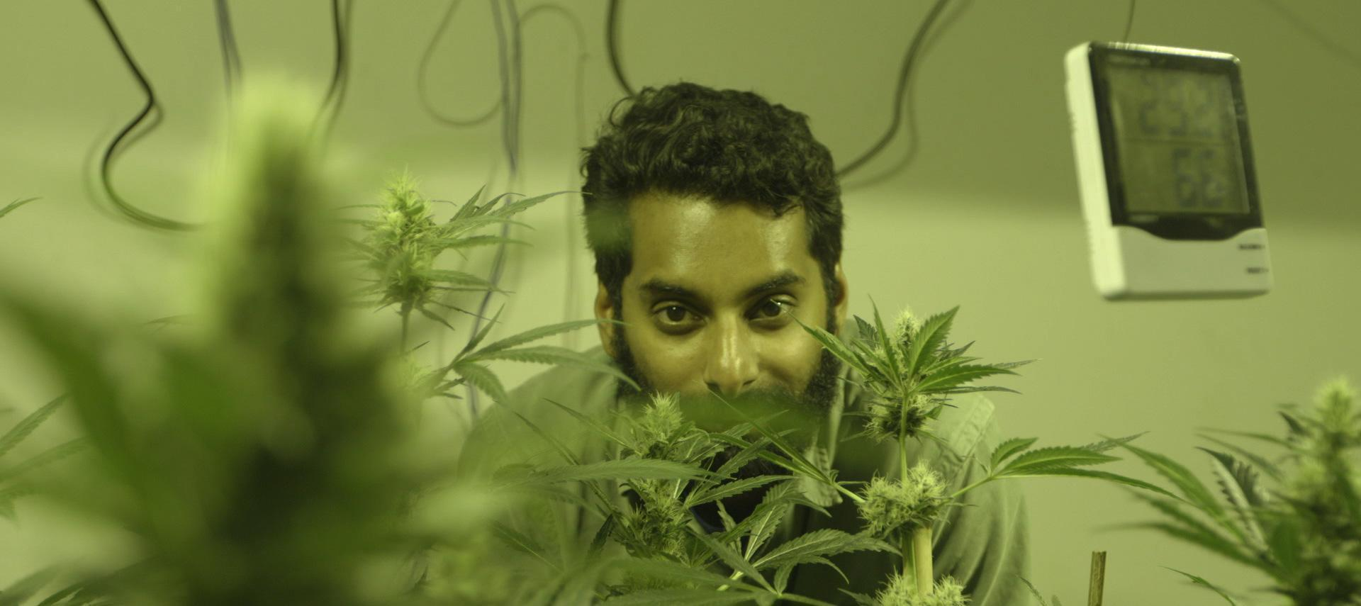 Check Out The Trailer For Viceland's New Show 'Weediquette'