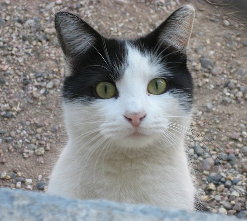 Can a feral cat become domesticated