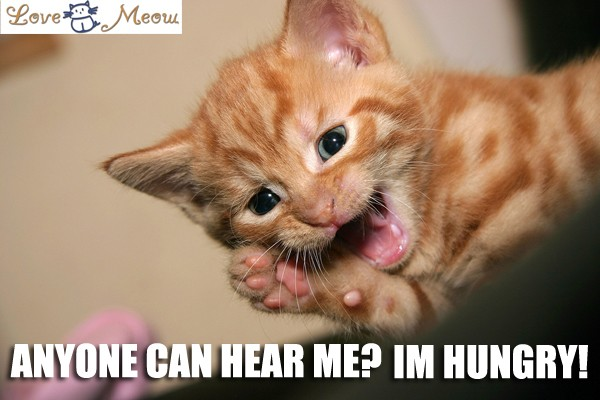 Add Lolcat Captions Love Meow