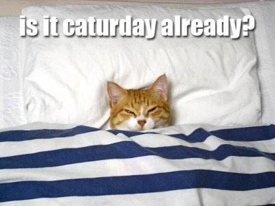 Bildresultat för kitten caturday