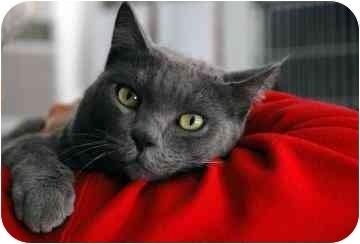 Lily Black Cat Anjellicle