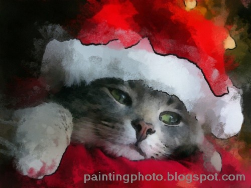 share using facebook - Merry Christmas Cat