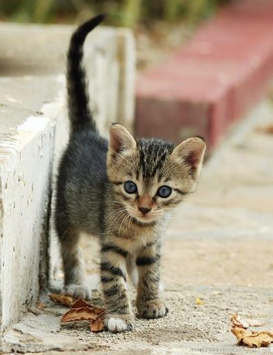 kitten eye watering
