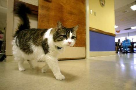 Can Cats Predict Death